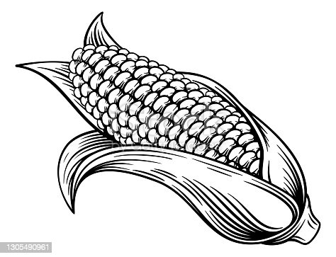 A sweet corn ear maize woodcut print or vintage etching style illustration