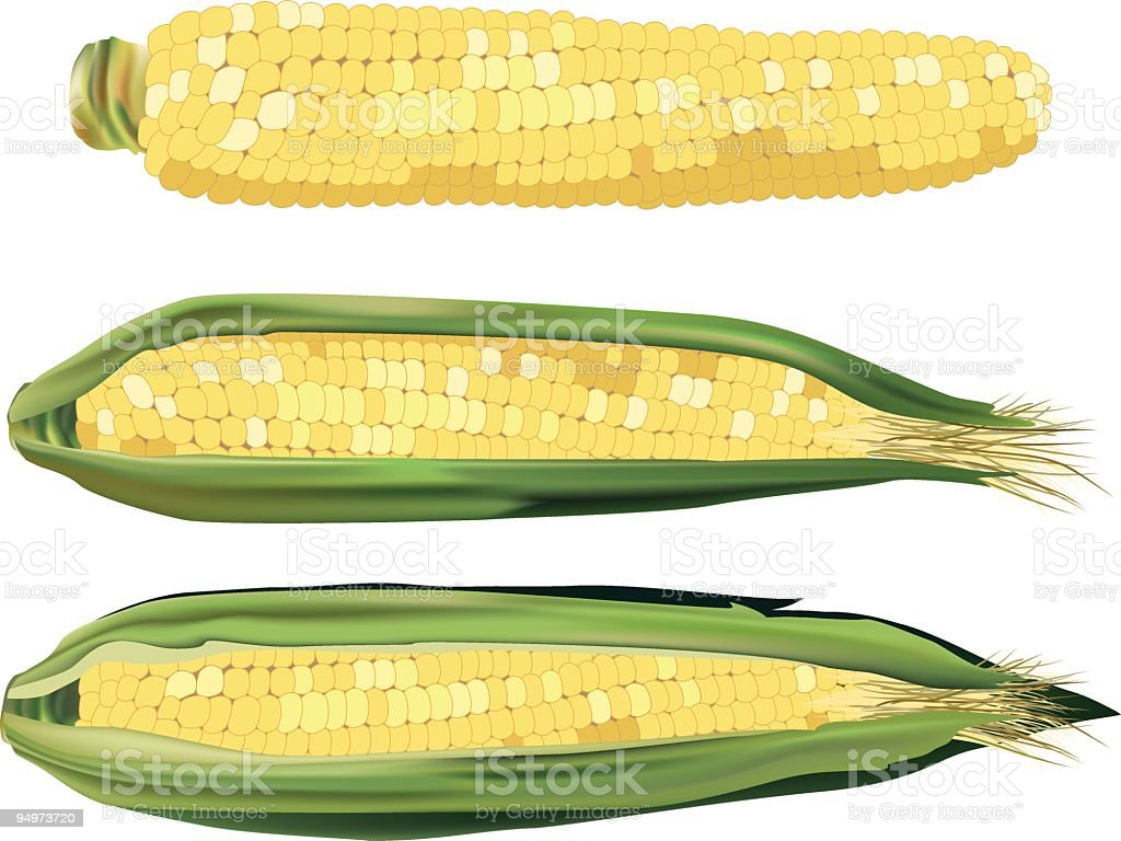 Sweet Corn vector art illustration