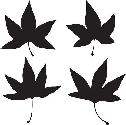 Vector silhouettes of a group of sweet gum leaves.
