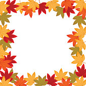 Sweet gum leaves (LIquidambar styraciflua). The flower and leaf are in the autumn. It is vector illustration for frame ans card. It vector is draw and no trace or copy image.