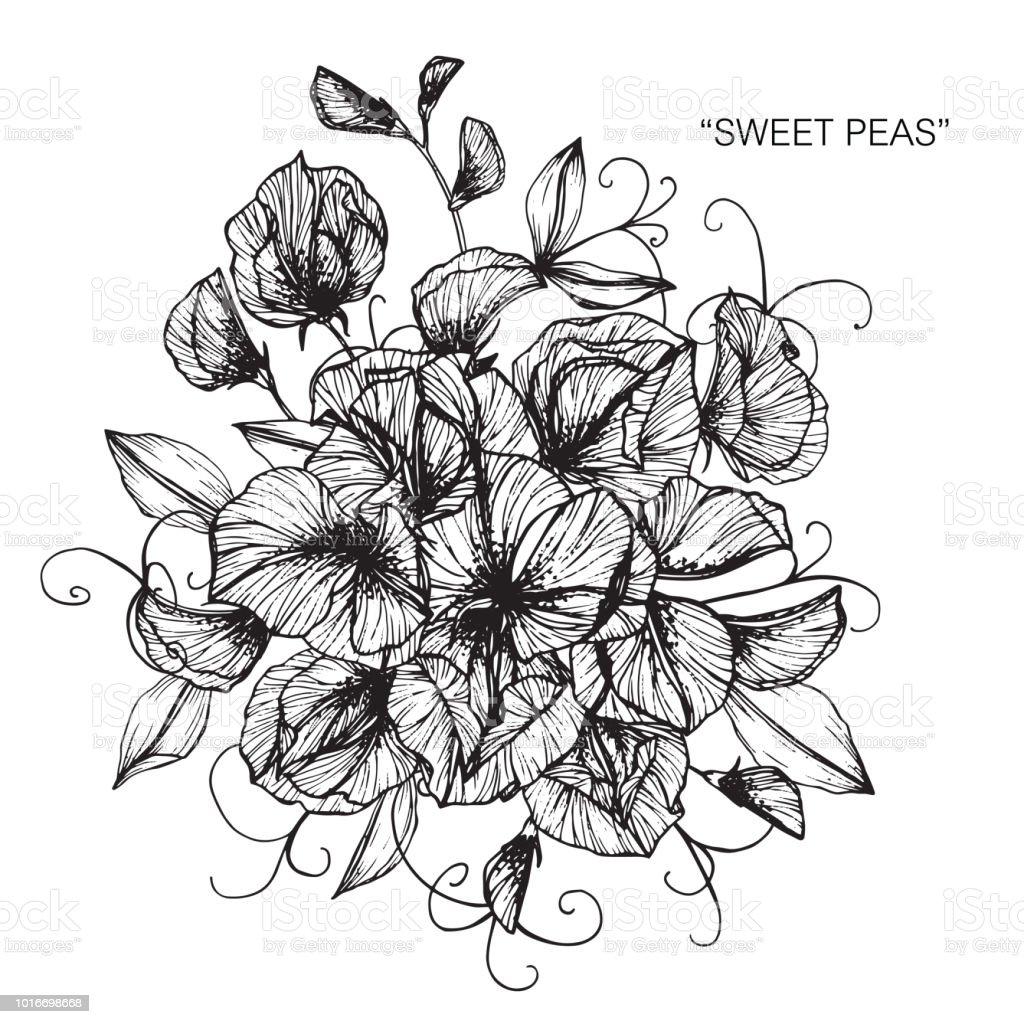 Prele Fleur Dessin Illustration Noir Et Blanc Avec Dessins
