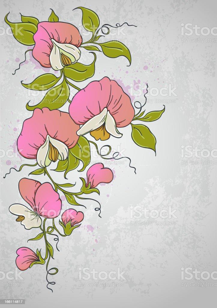 Sweet pea royalty-free stock vector art