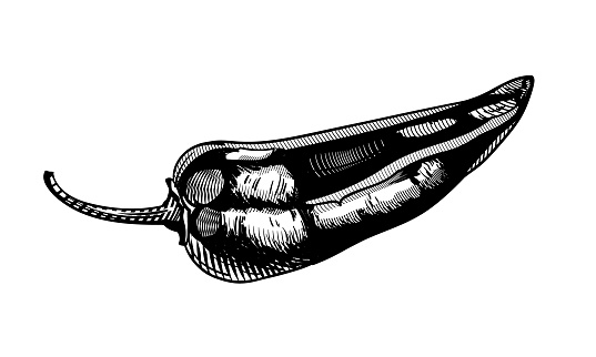 Sweet pepper. Black and white graphic image