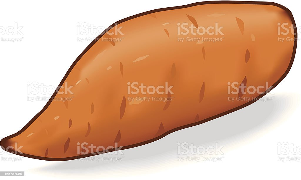 Sweet Potato vector art illustration