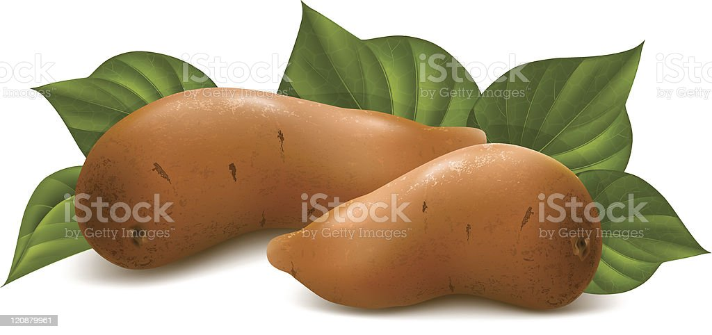 Sweet potato with leaves. vector art illustration