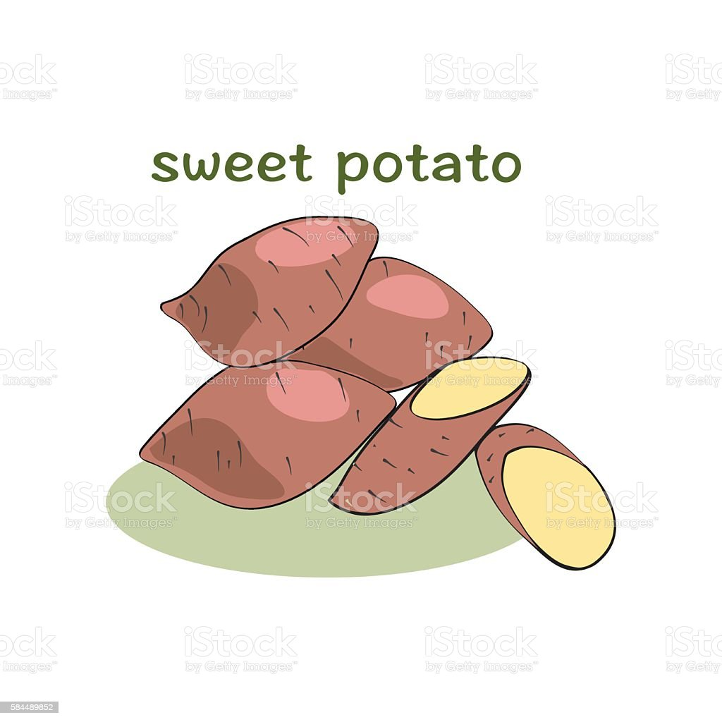 Sweet potatoes isolated on white background vector art illustration