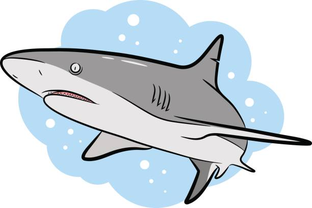 Swimming Grey Shark Vector Cartoon vector art illustration