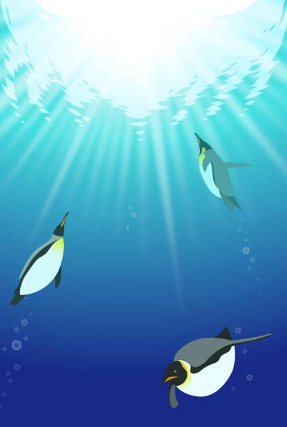 stockillustraties, clipart, cartoons en iconen met zwemmen pinguïns onder het water - pinguins swimming