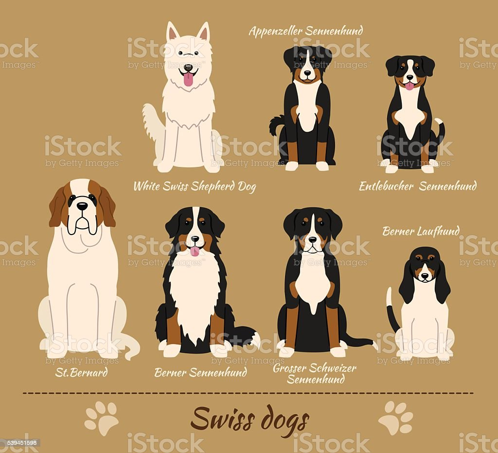 Swiss Breed Of Dogs Stock Illustration Download Image Now