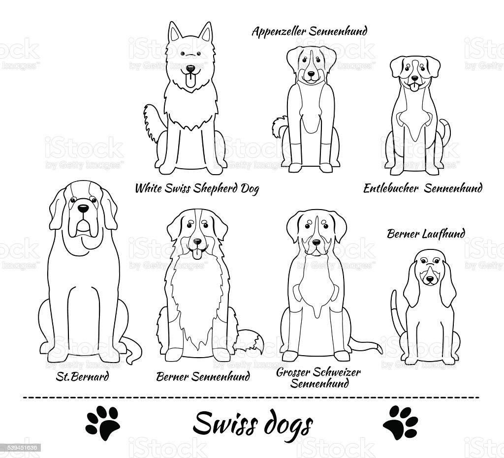 Swiss breed of dogs vector art illustration