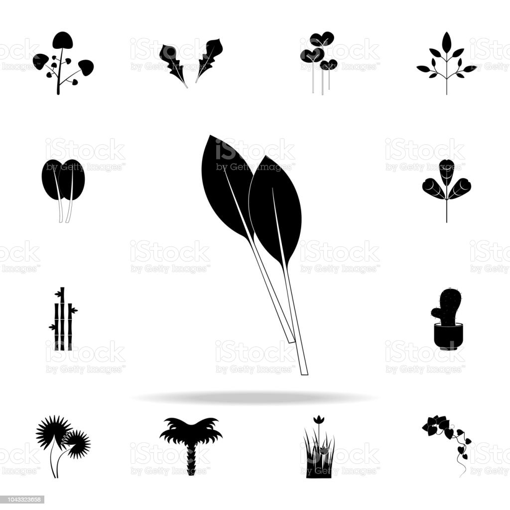 swiss chard icon. Plants icons universal set for web and mobile vector art illustration