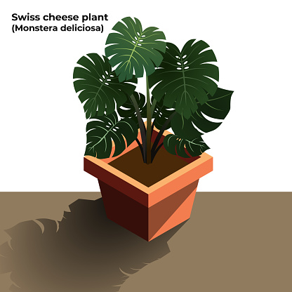 Swiss Cheese Plants Illustration. Monstera deliciosa. Air Purifying Plant illustration on White Background. Vector Stock Illustration