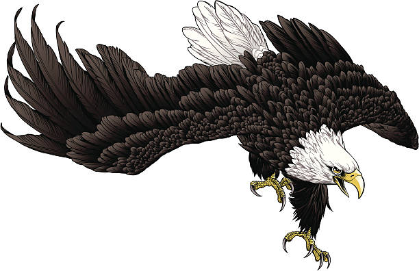 Swooping eagle vector art illustration