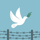 Symbol peace white dove flies over the barbed wire. vector illustration