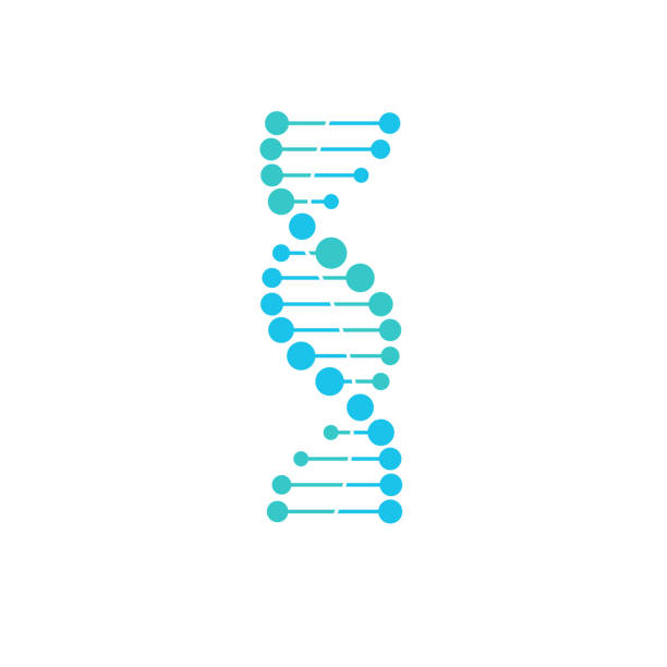 DNA symbol strand Isolated on white background vector art illustration