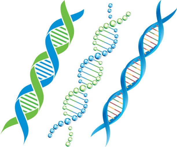 DNA symbol File format is EPS10.0.  helix model stock illustrations