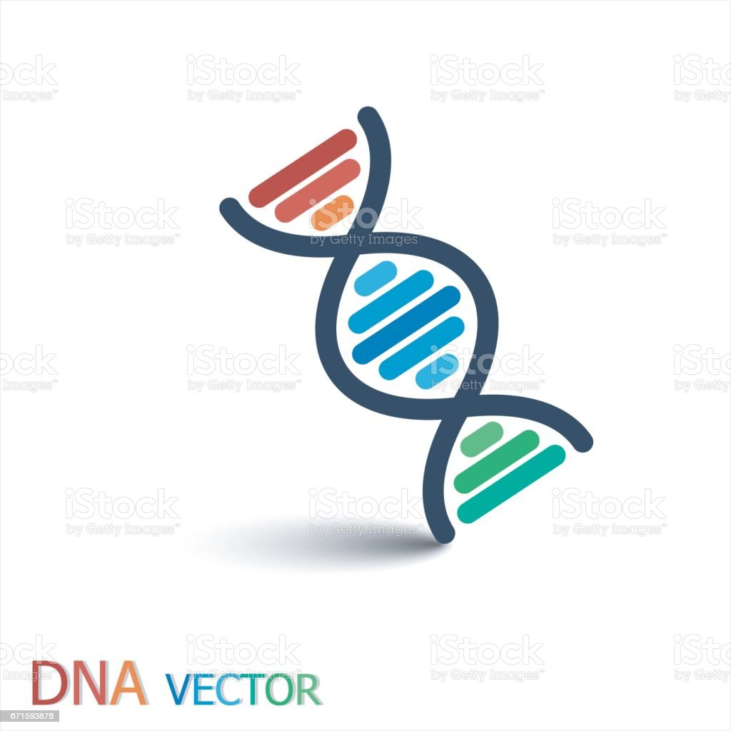 DNA ( Deoxyribonucleic acid ) symbol  ( Double strand DNA ) vector art illustration