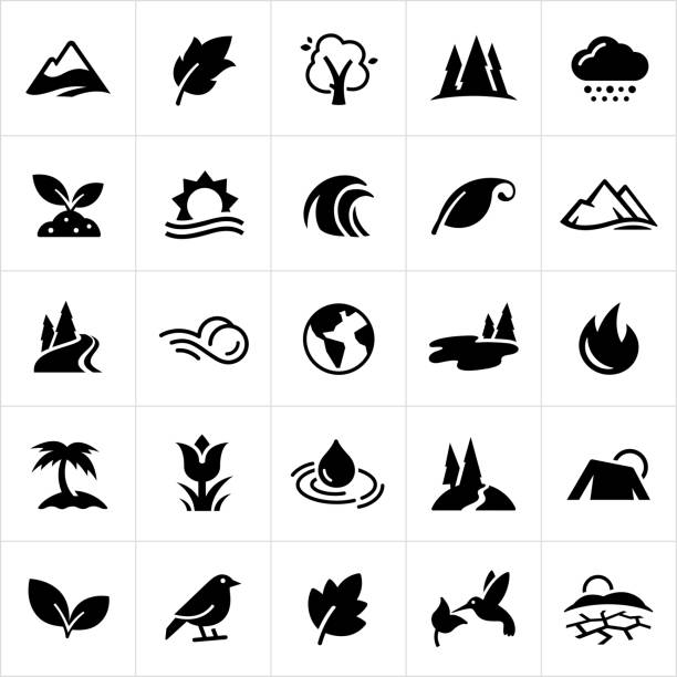 symbols of nature icons - palm tree stock illustrations