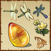 Symbols of summer, plants, dragonflies and amber