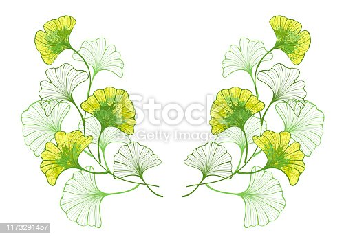 Symmetrical pattern of twigs and artistic, autumn, colorful, ginkgo biloba leaves painted with yellow and green paint on white background.