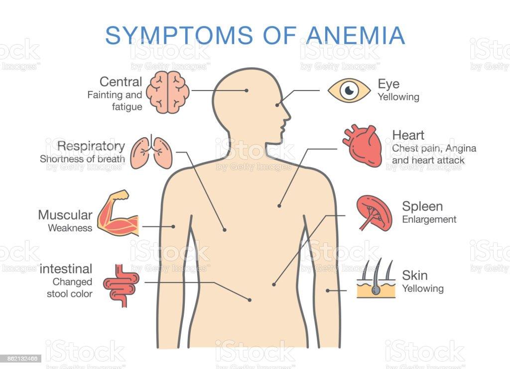 types d anemie