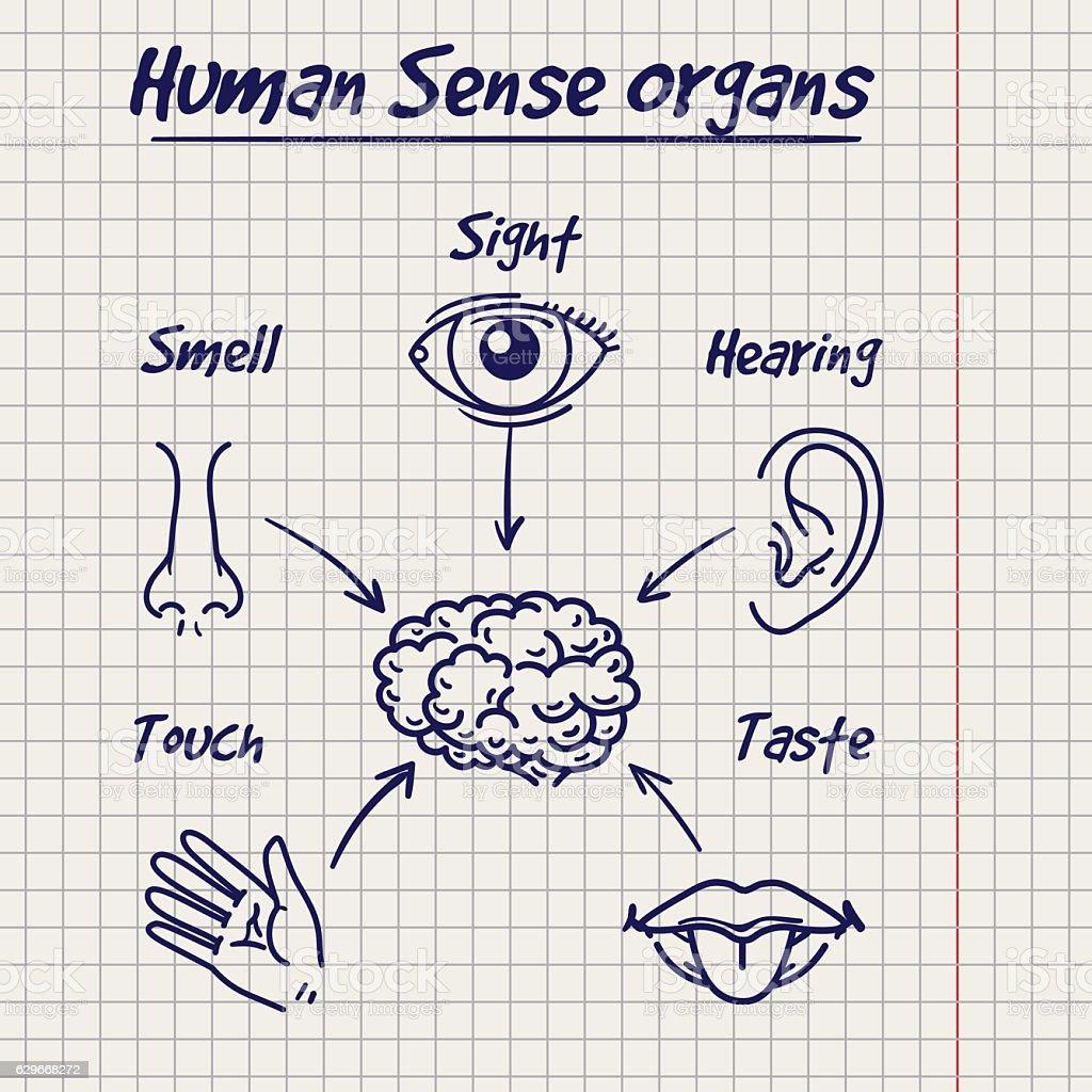 Synopsis of human sense organs sketch vector art illustration