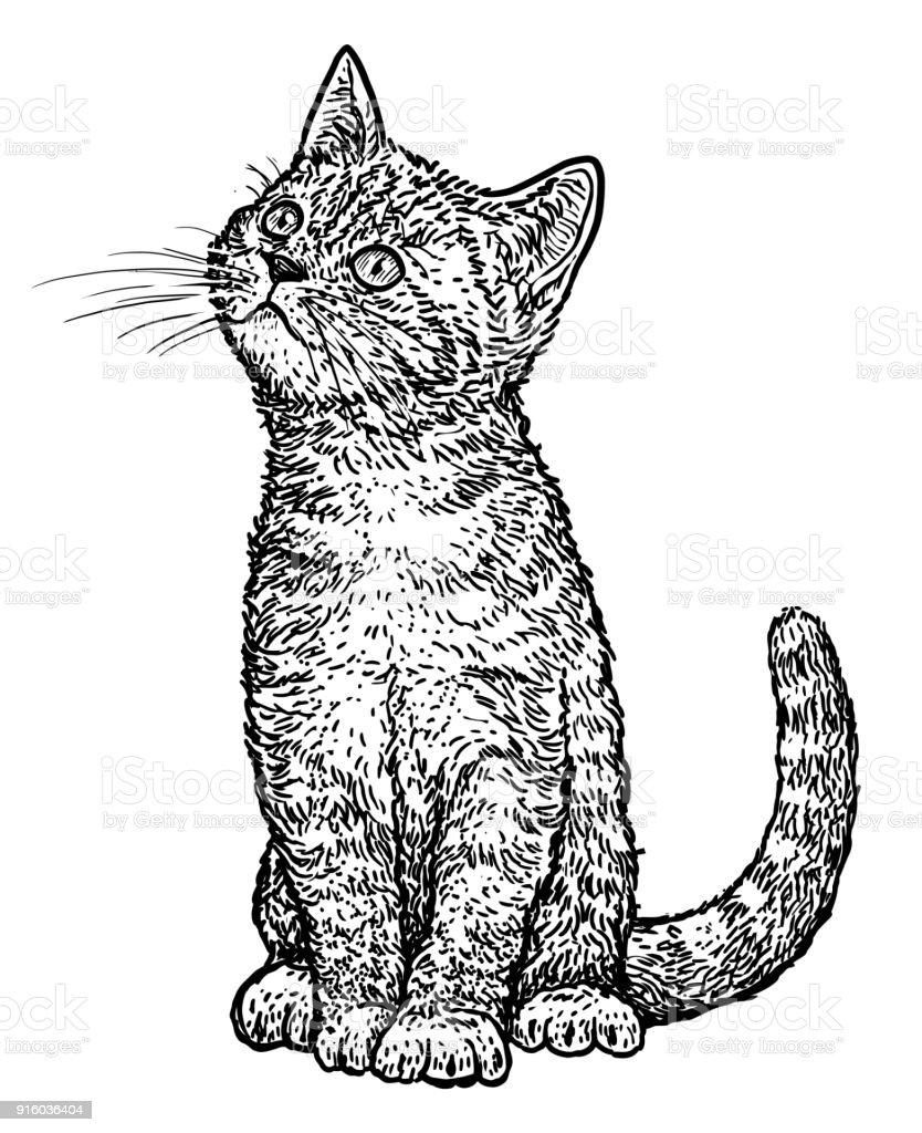 とら子猫イラストドローイング彫刻インクライン アートベクトル