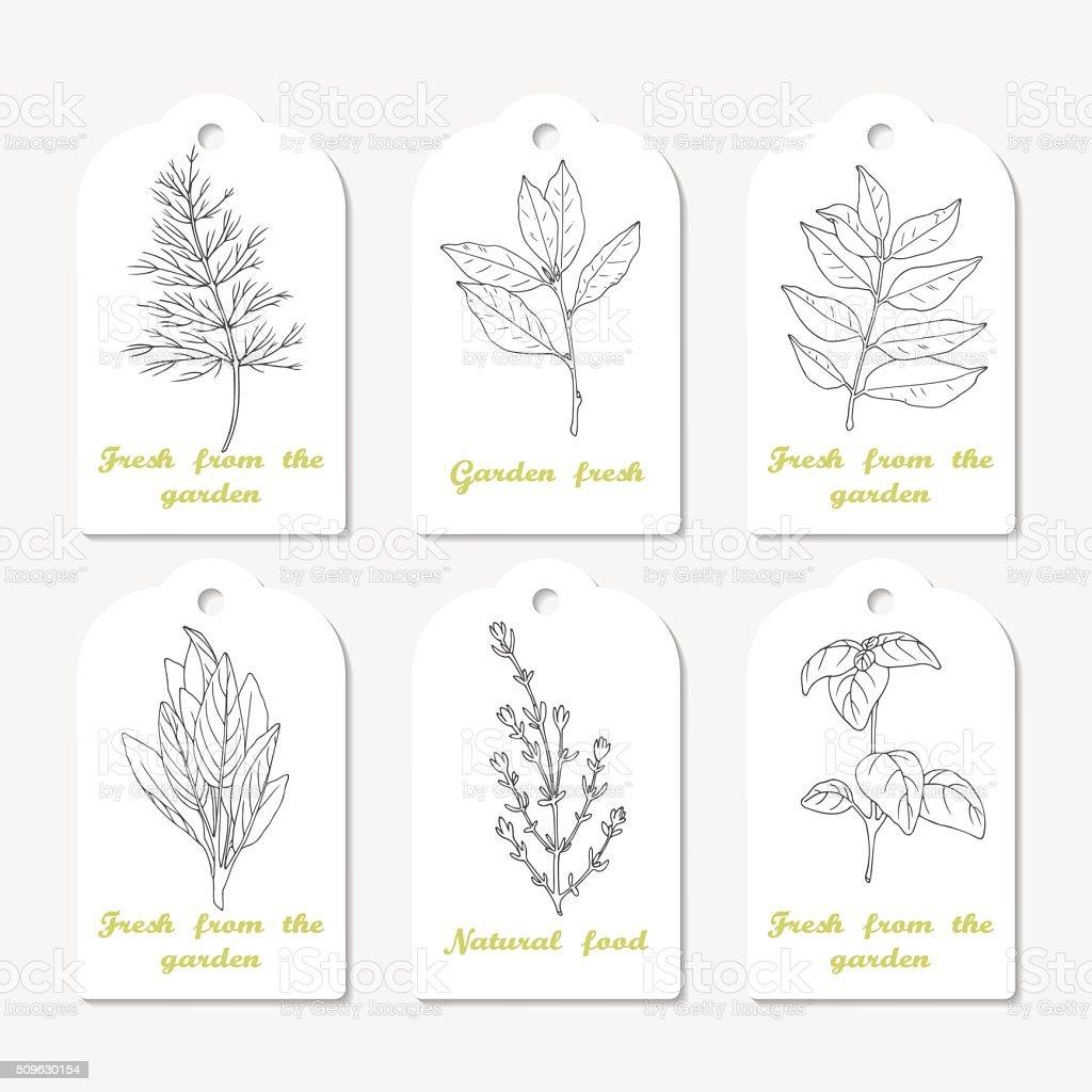 Tags collection dessiné à la main avec des herbes épicées de l'aneth, la feuille de laurier - Illustration vectorielle