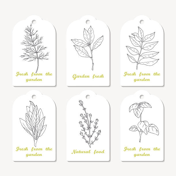 tags collection with hand drawn spicy herbs dill, bay leaf - indian food stock illustrations, clip art, cartoons, & icons