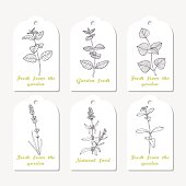 Tags collection with hand drawn spicy herbs melissa, mint, perilla