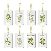 Tags with legumes plants with leaves, pods and flowers
