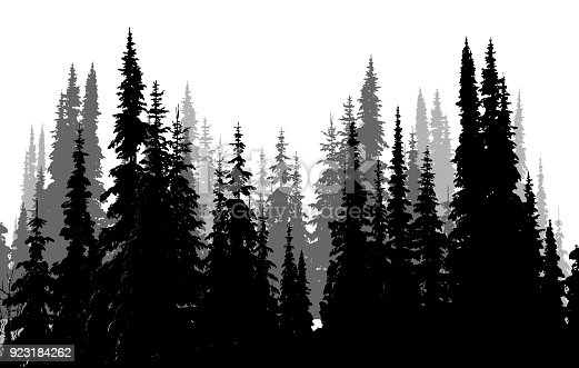 Tall Evergreen Forest in a silhouette illustration in black and white