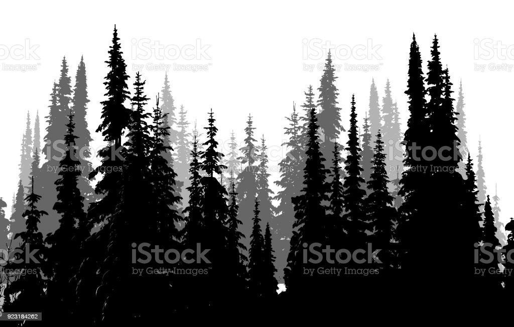 Hohen immergrünen Wald – Vektorgrafik