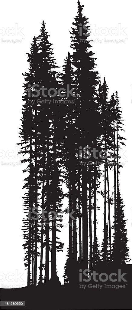 Tall Pine Trees vector art illustration