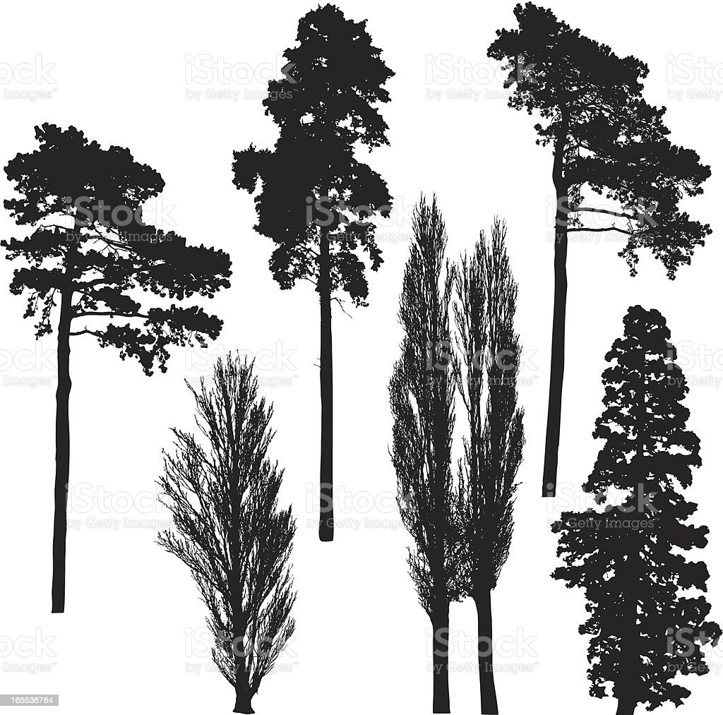 Tall tree silhouette collection vector art illustration