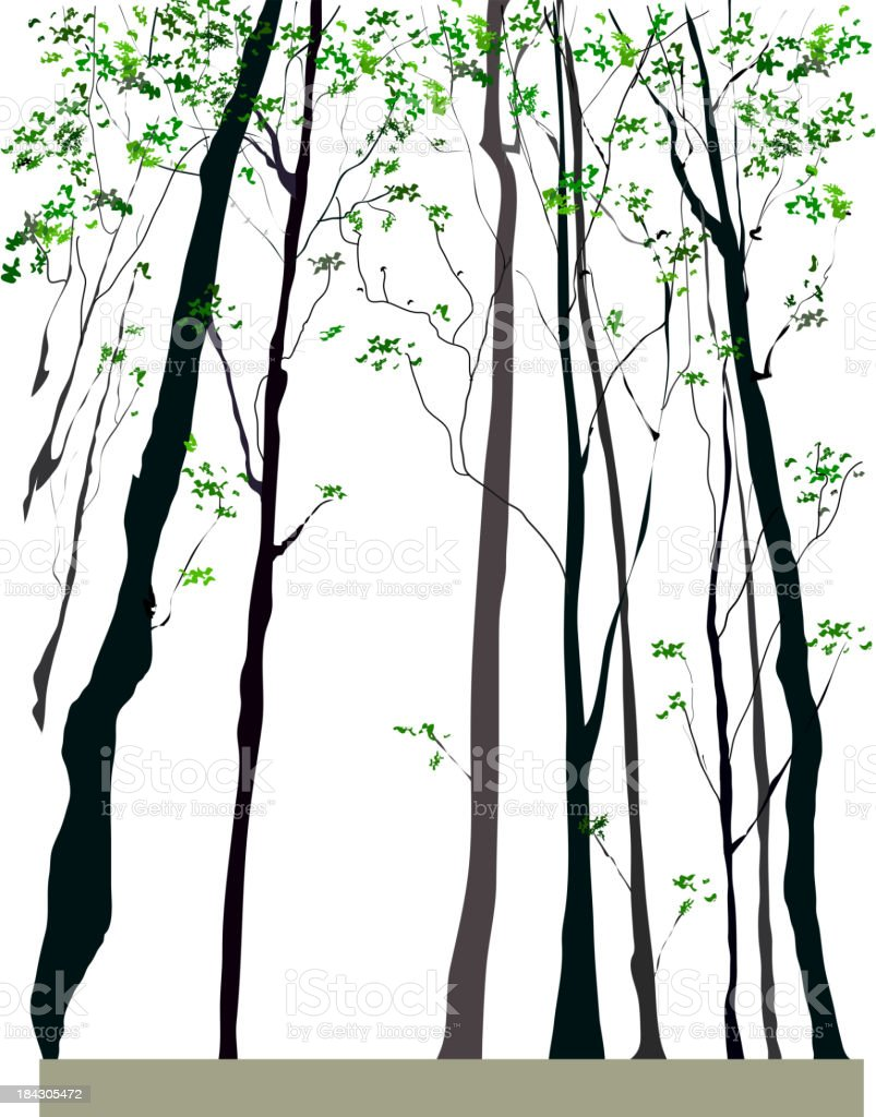 Tall trees vector art illustration