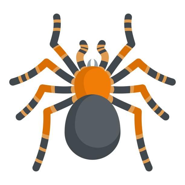tarantula icon, cartoon style - tarantula stock illustrations