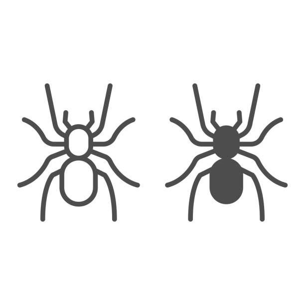 Tarantula line and solid icon, Insects concept, scary big spider sign on white background, dangerous tarantula icon in outline style for mobile concept and web design. Vector graphics. Tarantula line and solid icon, Insects concept, scary big spider sign on white background, dangerous tarantula icon in outline style for mobile concept and web design. Vector graphics arachnid stock illustrations