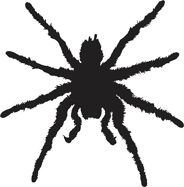 tarantula silhouette - tarantula stock illustrations