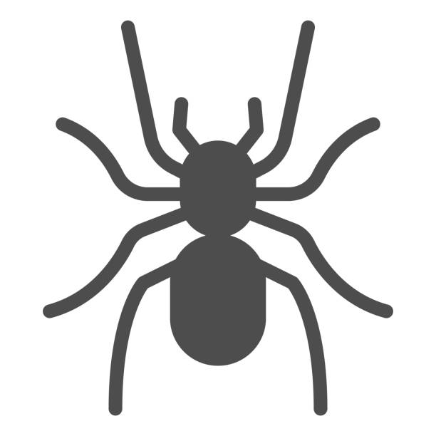 Tarantula solid icon, Insects concept, scary big spider sign on white background, dangerous tarantula icon in glyph style for mobile concept and web design. Vector graphics. Tarantula solid icon, Insects concept, scary big spider sign on white background, dangerous tarantula icon in glyph style for mobile concept and web design. Vector graphics arachnid stock illustrations