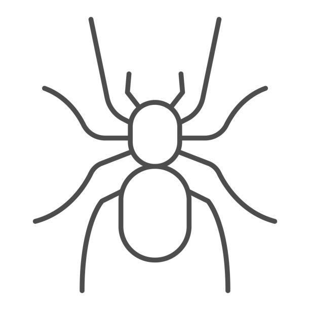 Tarantula thin line icon, Insects concept, scary big spider sign on white background, dangerous tarantula icon in outline style for mobile concept and web design. Vector graphics. Tarantula thin line icon, Insects concept, scary big spider sign on white background, dangerous tarantula icon in outline style for mobile concept and web design. Vector graphics arachnid stock illustrations