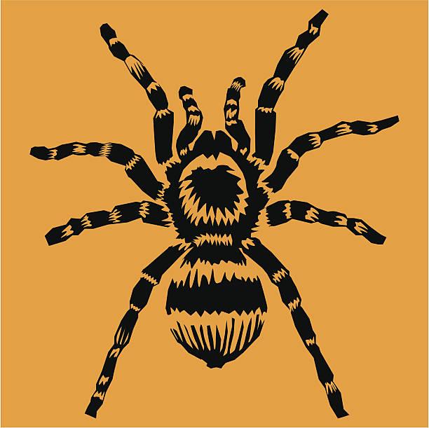 tarantula - tarantula stock illustrations