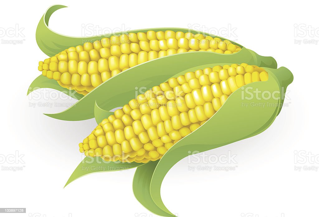 Tasty sweetcorn illustration vector art illustration