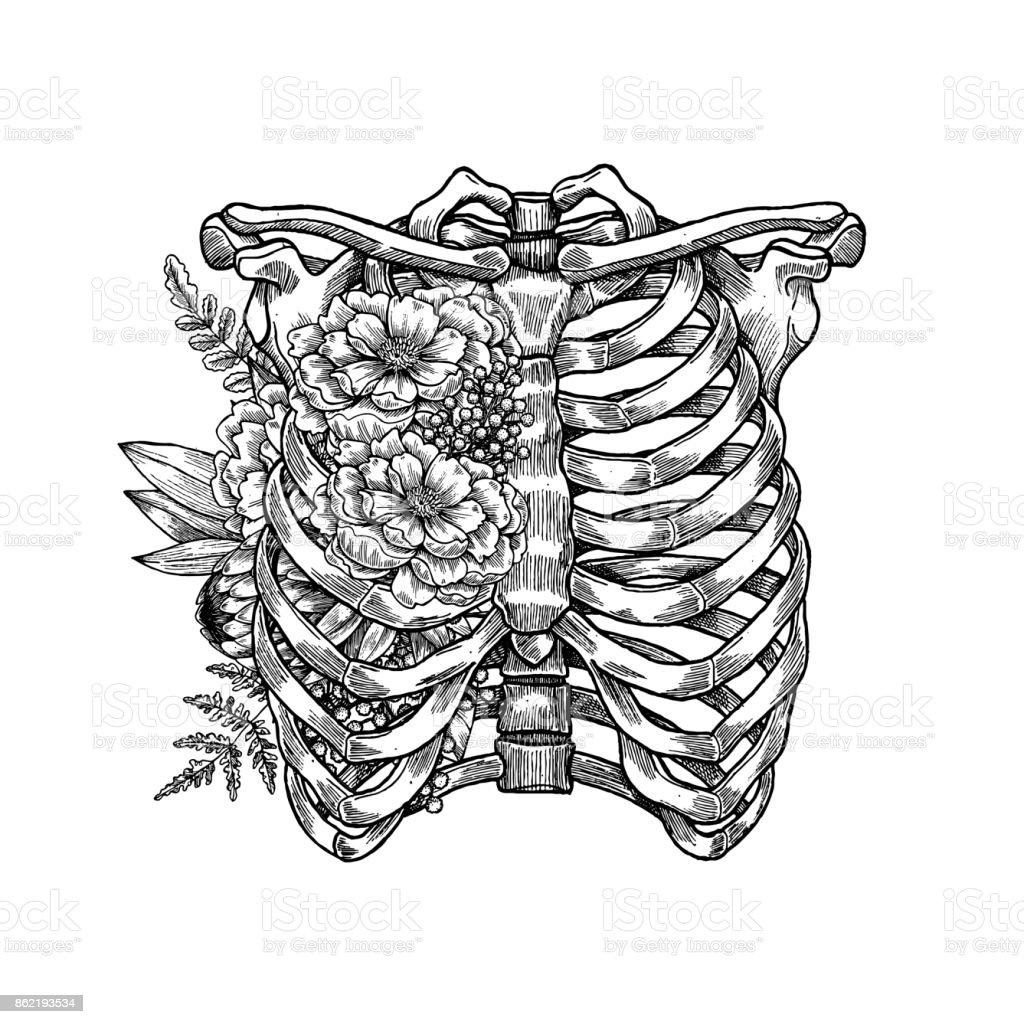 Tattoo anatomy vintage floral illustration. Floral chest skeleton. Vector illustration vector art illustration