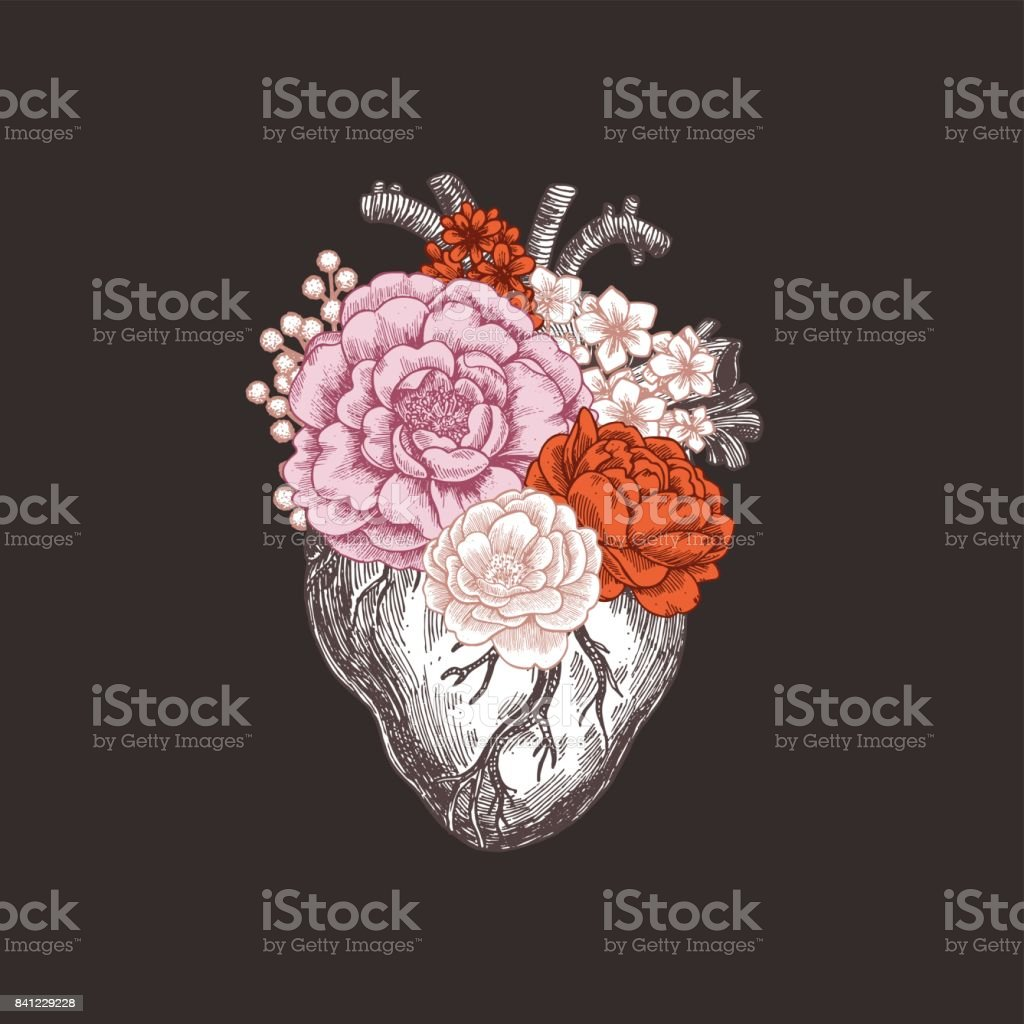 Tattoo anatomy vintage illustration. Floral anatomical heart. Vector illustration royalty-free tattoo anatomy vintage illustration floral anatomical heart vector illustration stock vector art & more images of anatomy