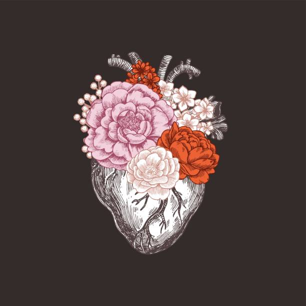 解剖学のビンテージ イラストを入れ墨。花の解剖学的心。ベクトル図 - ハートのタトゥー点のイラスト素材/クリップアート素材/マンガ素材/アイコン素材