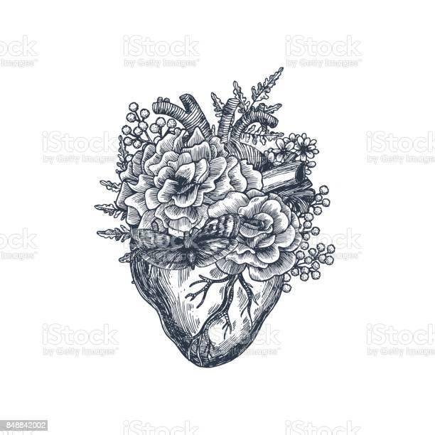 Tattoo anatomy vintage illustration floral anatomical heart vector vector id848842002?b=1&k=6&m=848842002&s=612x612&h=uc66refmmje 1uamzggmqejqax4gn6iboe amj1erxq=