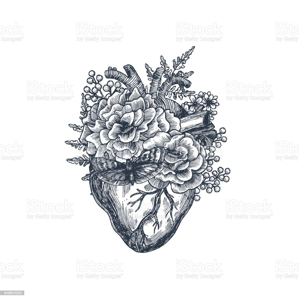 Tattoo anatomy vintage illustration. Floral anatomical heart. Vector illustration - illustrazione arte vettoriale