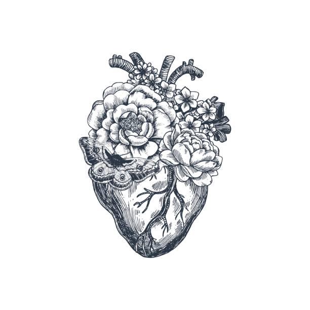 ilustrações de stock, clip art, desenhos animados e ícones de tattoo anatomy vintage illustration. floral anatomical heart. vector illustration - coração humano
