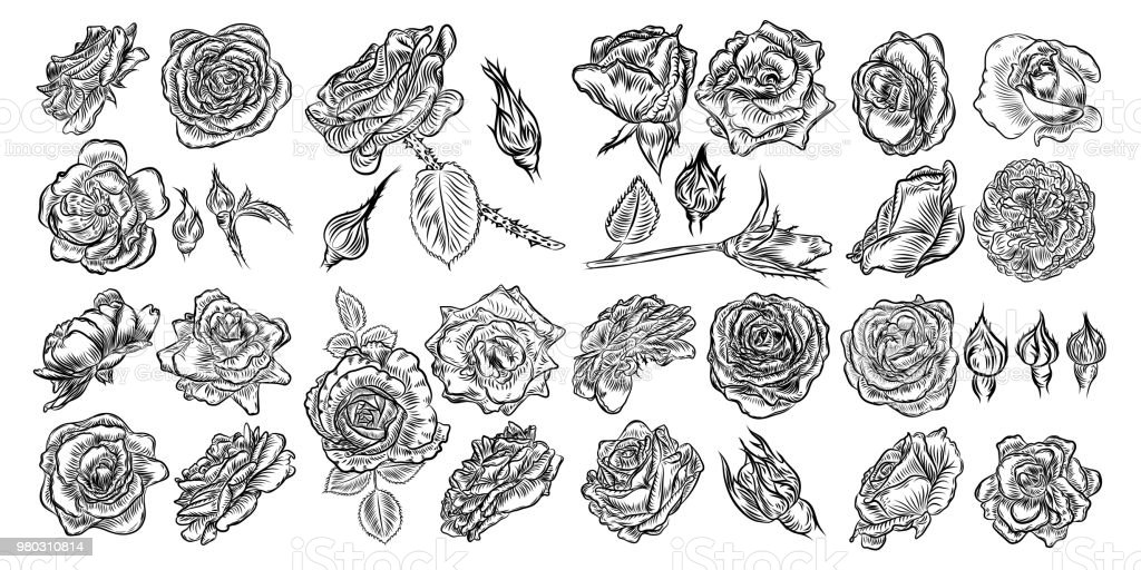 Tattoo Concept Rose Flowers Set Tattooing Idea Collection Style Ink